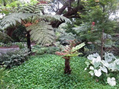 New Orleans Garden Design a graceful garden 03 Through Our Garden Gates Design Elements For Louisiana Landscapes